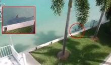 เกิดอะไรขึ้นเมื่อฉลามว่ายน้ำอยู่หน้าบ้าน