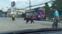 ตลึง!!! หมีหลุดหน้าสวนสัตว์ ลพบุรี