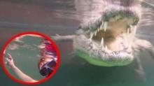 """หวิดเอาชีวิตไม่รอด """"เซลฟี่ใต้น้ำกับไอ้เข้""""แต่สุดท้ายได้ภาพอย่างเท่ (มีคลิป)"""