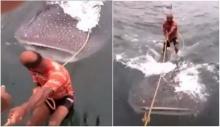 ทั่วโลกฮือประณาม คลิปแก๊งหนุ่มพิเรนทร์ขึ้นยืนบนหลังฉลามวาฬ