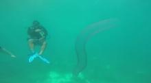 นักดำน้ำพบสิ่งลึกลับใต้ท้องทะเล และยังไม่มีใครแน่ใจว่ามันคือตัวอะไร!?
