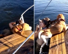 มาดูปฎิบัติการน้องหมาช่วยเจ้านายที่กำลังจมน้ำ