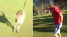 จิงโจ้ โมโหวิ่งไล่นักกอล์ฟ ไม่พอใจล้ำดินแดน