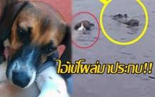 เจ้านายเข่าอ่อน! ลูกหมาแหวกว่ายอยู่ในแหล่งน้ำท่วม จู่ๆ ไอ้เข้โผล่มาประกบ!! (คลิป)