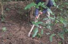ขยี้ตาแรง! หนุ่ม ขุดหลุมยักษ์ กลางป่า ทิ้งไว้ 1 คืน รุ่งเช้ามาดู เจอเต็มๆ 2 ตา!! (คลิป)