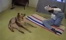 น่ารัก! หมาเล่นโยคะ