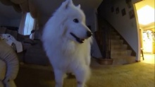 เฮ้ย! นี่หมาตัวเดิมหรือเปล่า แค่หวีขนก็เปลี่ยนไป!!