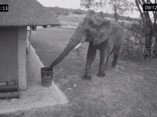 เมื่อช้างเดินมาเจอถังขยะ...อะไรจะเกิดขึ้น?