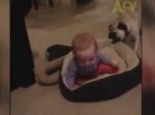 ศึกชิงที่นอน เด็กกับหมา มาลุ้นกันใครจะชนะ!?