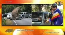 อึ้ง! ช้างขึ้นขย่มรถ เจ้าของเชื่อเป็นสิริมงคล