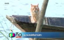 WOW!! แมวเปอร์เซียช่วยหาปลา เป็นงานอดิเรก!!!