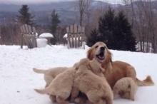 น่ารักอ่ะ แม่หมาเล่นกับลูกๆตัวน้อยเป็นฝูง!!