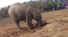 แม่ช้างตะกุยดินนาน 11 ชม. เพื่อช่วยลูก