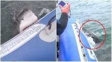 เผ่นแทบไม่ทัน นาทีฉลามขาวกัดเรือยางจนแฟบ !!