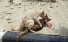 สุดเศร้า! แมวตัวหนึ่งกำลังจะตาย และเพื่อนของมันได้ทำบางสิ่งที่ทำให้เรานั้นน้ำตาไหล