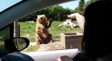 ยอดวิวพุ่งทะลุล้าน!! เจ้าหมี โบกมือทักทาย และรับของกินได้อย่างแม่น!!!