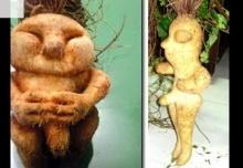 5 อันดับพืชที่แปลกประหลาดที่คุณไม่เคยรู้ว่ามีอยู่จริง