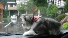 น่ารักอ่ะ!! เมื่อเจ้าแมวน้อยได้นั่งหน้ารถ ความฮาก็เกิด !!!
