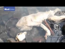 สยอง!! หลังพบซากศพตัวดูดเลือดแพะ สัตว์ในตำนาน