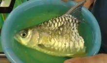 โคตรอึ้ง!! เจ้าบุญครึ่ง ปลามีแค่ครึ่งตัวแต่ยังว่ายน้ำได้!!!