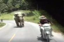 วินาที... ช้างป่าไล่มอเตอร์ไซค์ช่างภาพ  ขณะถ่ายช้างป่าอาละวาด