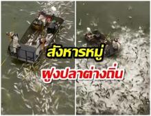 ชอร์ตฆ่าหมู่ปลาต่างถิ่น สหรัฐปล่อยกระแสไฟลงน้ำจนดิ้นพล่าน(คลิป)