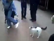 แมว..อย่างโหดอ่ะ