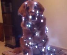 คริสต์มาสป่วนๆกับก๊วนหมา แมว