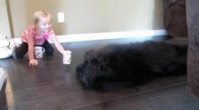 น่าร๊ากก! หนูน้อยเล่นจิบน้ำชายามบ่ายกับพี่หมาตัวใหญ่