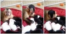 เจ้าลิงน้อยดูแลลูกหมา น่ารักแบบเกินเหตุ