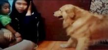 เจ้าหมาโกลเด้นสุดน่ารัก ไม่พอใจเมื่อเจ้านายบอกมันว่า ไม่หล่อ!!