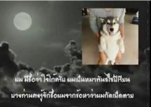 ร้องไห้หนักมาก! คลิประลึกถึง โจโก้ เล่าเหตุการณ์ที่คนรักสัตว์ดูแล้วน้ำตาไหล!(ชมคลิป)