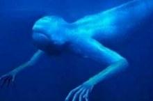 สุดลึกลับ!! สัตว์แปลกใต้ทะเล ดูแล้วคิดว่ามีจริงมั้ย!??