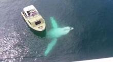 สุดยอดฝูงปลาวาฬ..ออกมาโชว์ตัวเล่นน้ำรอบเรือนักท่องเที่ยว