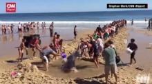 เมื่อฉลามเกยตื้น...มนุษย์ทุกคนรวมตัวกันมาทำแบบนี้ให้มัน