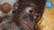 น่าสงสารมากวินาทีช่วยลูกลิง..หลังคนเอาใส่กล่องทิ้งตากแดด