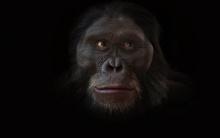 ย้อนดูวิวัฒนาการบรรพบุรุษสู่มนุษย์ 6 ล้านปีใน 1 นาที