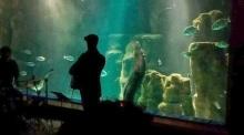 ปลาไหลยักษ์เต้นระบำใต้น้ำ เอวพลิ้วเชียว