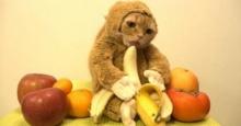 ดราม่าซ่ะงั้น!!ชาวเน็ตด่าเจ้าของคลิปแมวใส่ชุดลิงทารุณสัตว์!