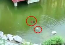 สุดยอดจริงๆ!!เมื่อเด็กน้อย2คนจมน้ำ แต่ก็รอดมาได้เพราะมีสติ!!!