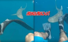ระทึก!! ฉลามจู่โจมนักดำน้ำ กัดเลือดกระฉูด! (คลิป)