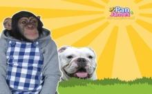 จำกันได้มั้ย? ขำกลิ้งลิงกับหมา ปัจจุบันเป็นแบบนี้แล้ว!!