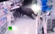 น่าสงสาร..ควายวิ่งหนีพ่อค้าเนื้อ บุกขวิดคนในร้าน สุดท้ายถูกยิงดับสลด!! (คลิป)