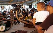 ชมตลาดค้างู!! ขายเป็นๆเลื้อยโชว์ให้เห็น ชอบตัวไหนแล่สดๆ จับจองตามอัธยาศัย (คลิป)