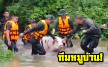 ทหารช่วย ทีมหมูบ้าน 8 ชีวิตหลุดคอก หลังฝนตกหนัก-น้ำท่วมหลายพื้นที่ในนครพนม (มีคลิป)