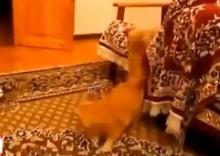 มีฮา เมื่อแมว เจอ เกมมาริโอ้
