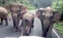 เมื่อช้างป่าเชื่อฟังคำสั่งเจ้าหน้าที่ ยอมหลบเข้าป่า เพื่อให้นักท่องเที่ยวผ่าน