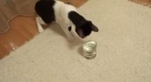 เมื่อแมวกับโซดามาเจอกัน จะเกิดอะไรขึ้น