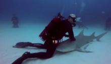 """เขาทำอะไร…เมื่อถูกล้อมรอบด้วย """"ฉลาม"""" !!!"""