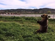 น่ารักอ่ะ! พี่หมีกับน้องหมาเล่นน้ำคลายร้อน